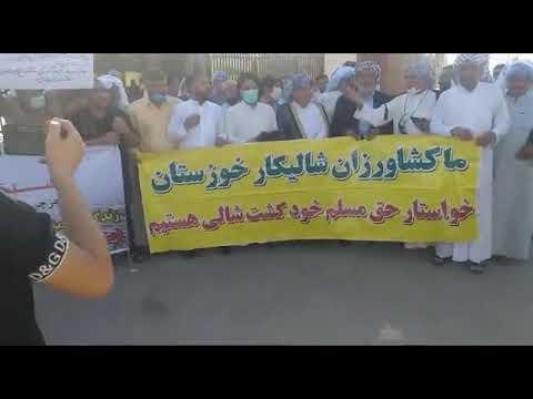 تجمع اعتراضی کشاورزان شالیکارخوزستان
