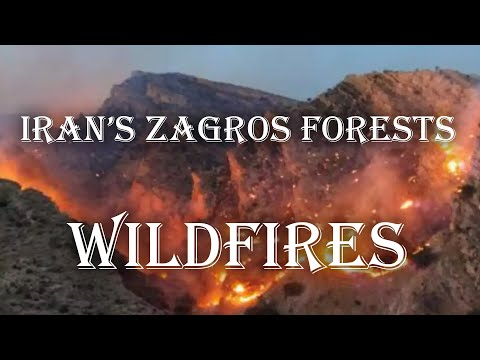 Iran's Zagros forests' wildfires and the authorities response