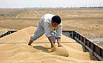 Iran becomes biggest wheat importer
